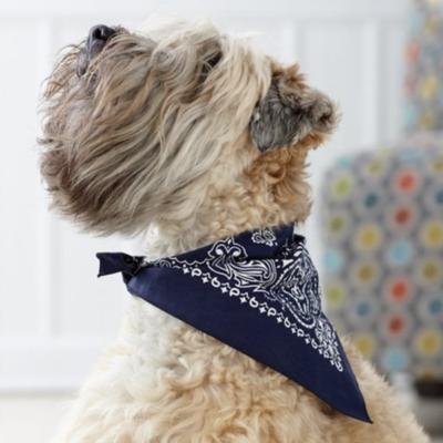 Dog | Pet Apparel